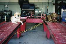 Our Dogs love to watch over your repairs and service from Katy Auto.